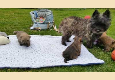 Mama Milka mit ihren Dreien