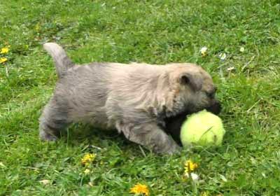 Rocky spielt Ball