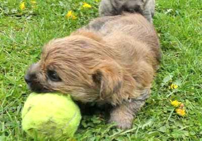 Baby und der Ball