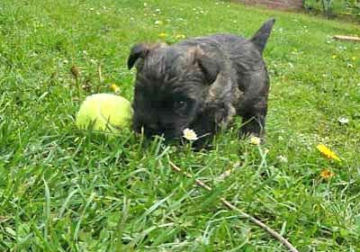 Bony und der Ball