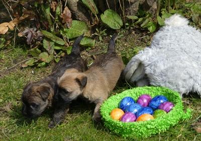 diese Beiden sind sich einig....Ostern macht Spaß!!