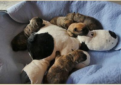 Alle fünf Babies kuscheln den Lupo