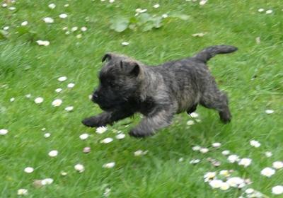 ...auch Dizzy zeigt sich mit 6 Wochen sportlich...