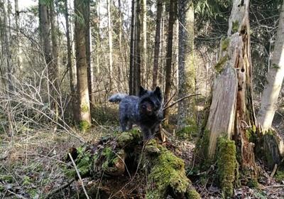 MacGefferts Yukon genannt Charley  wohnt in der Schweiz und schickt Grüße.