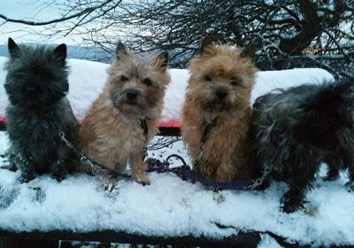 Meine Mädel beim Spaziergang im Schnee